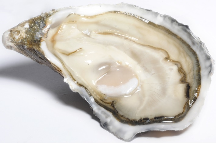 Speciale Ancelin Oyster
