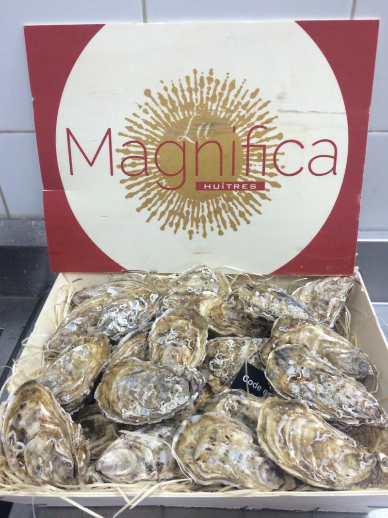 Special La Magnifica Oyster