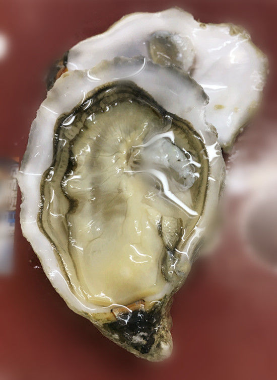 Portuguese Oyster