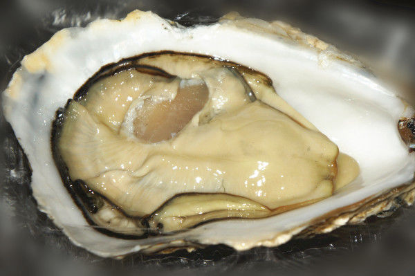 Scottish Rock Oyster