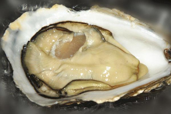 Scottish Rock Oyster