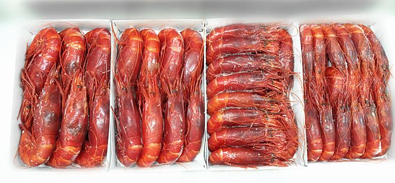 西班牙紅蝦 - 加迪斯紅皇者
