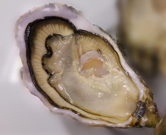 Special Gillardeau Oyster