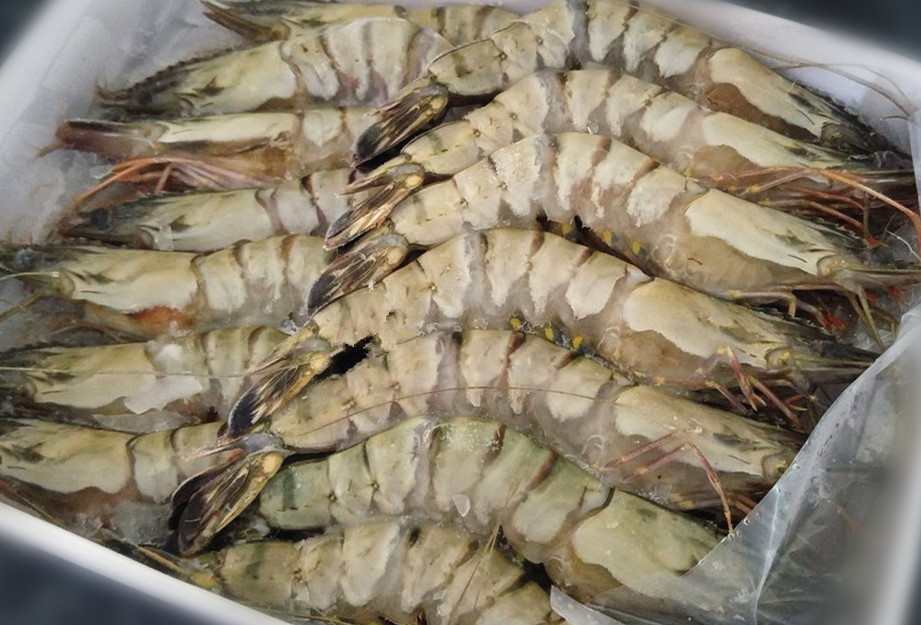 Tiger Prawn FZ, Whole